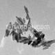 Ruthenium Nanopowder / Nanoparticles
