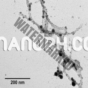 Tin Carbon Nanotubes